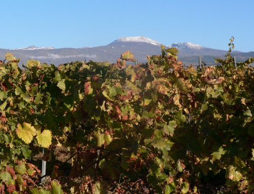 Ruta por las bodegas de altura de La Alpujarra de Granada